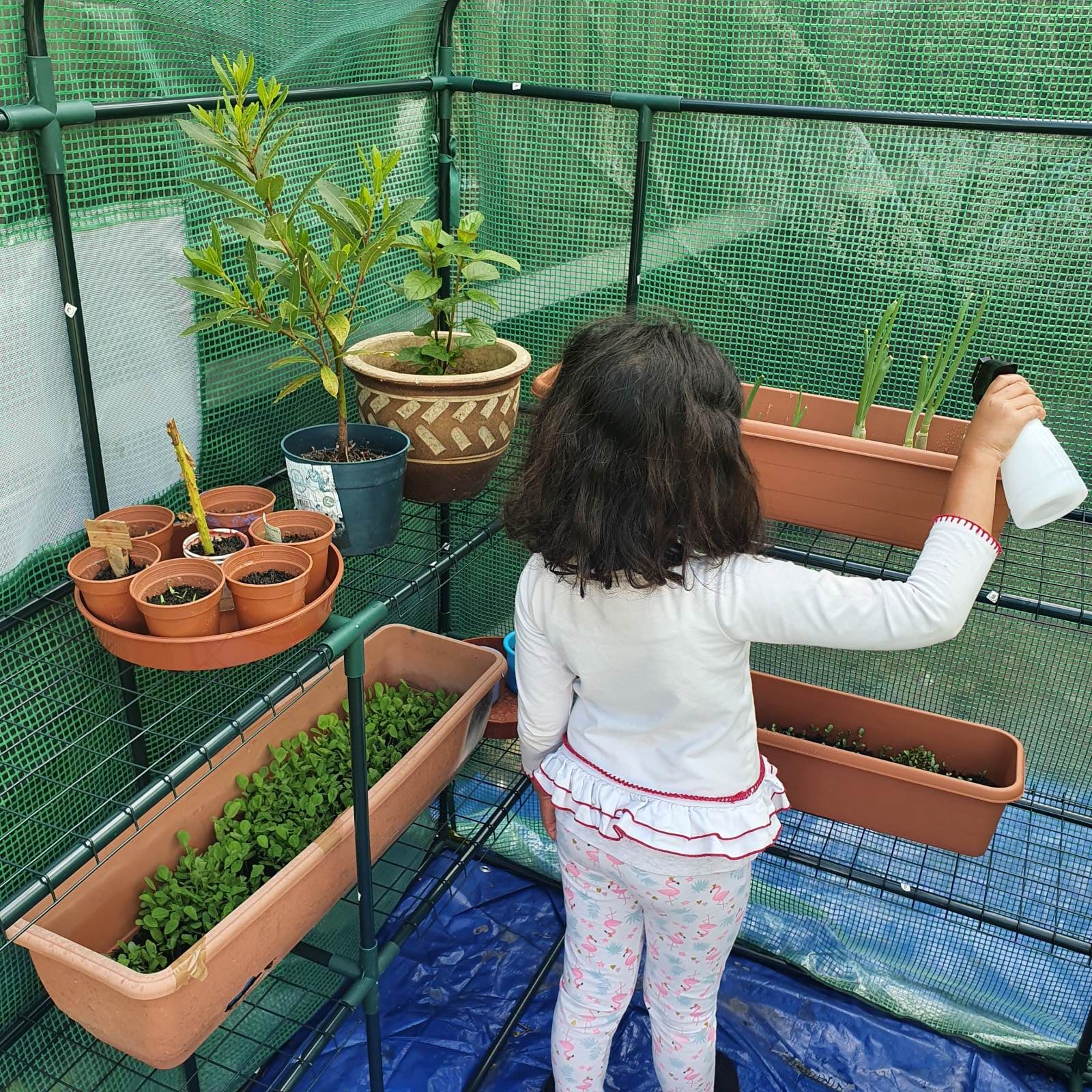 Aria_watering_plants_in_green_house
